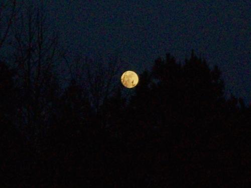 madeline-josh-moon-0105